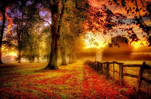 Autumn Facts