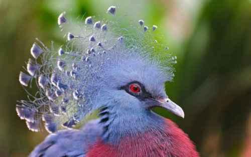 Aves Beauty