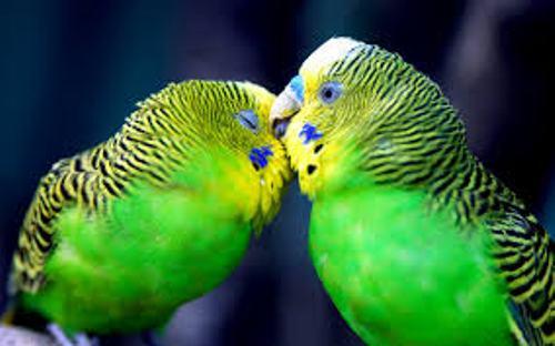 Aves Green