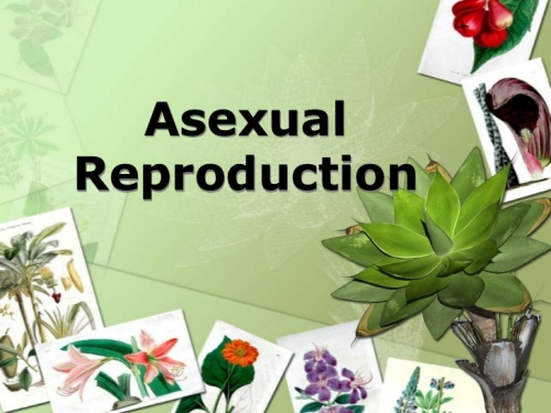 Facts about Asexual Reproduction