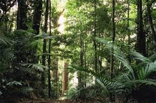 Facts about  Australian Rainforests
