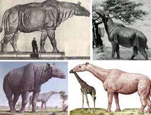 Baluchitherium Size