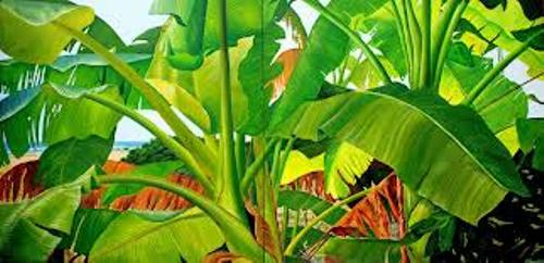 Banana Trees in Asia