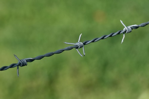 Barbed Wire Pic