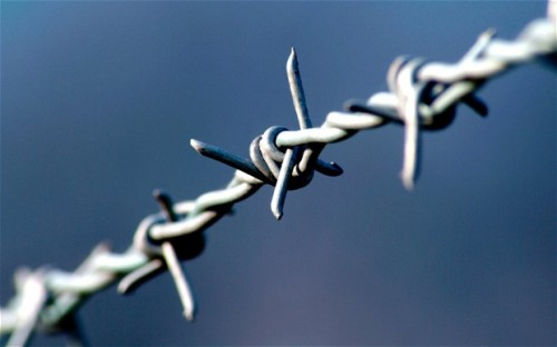 Barbed Wire Picture