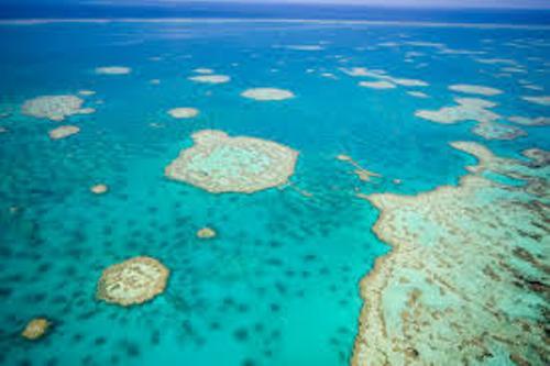 Barrier Reef Beauty