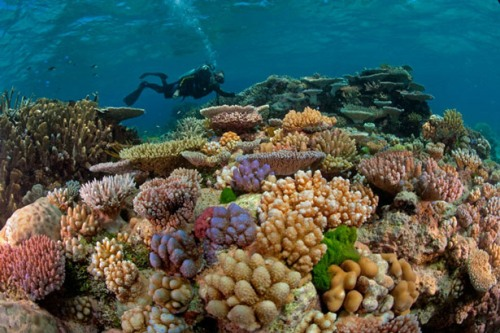 Barrier Reef Pic