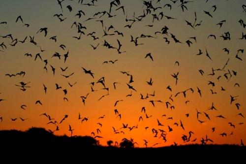 Bats Sunset