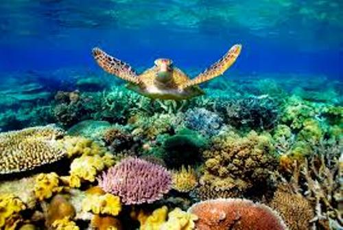 Facts about Barrier Reef