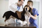 10 Facts about Being a Veterinarian