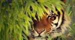 10 Facts about Bengal Tigers