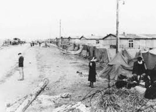 Bergen Belsen Concentration Camp Facts