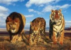10 Facts about Big Cats