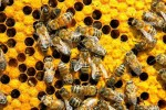 8 Facts about Bees