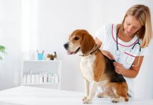 information about being a veterinarian