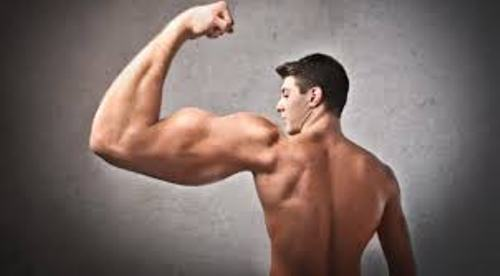 Facts about Biceps