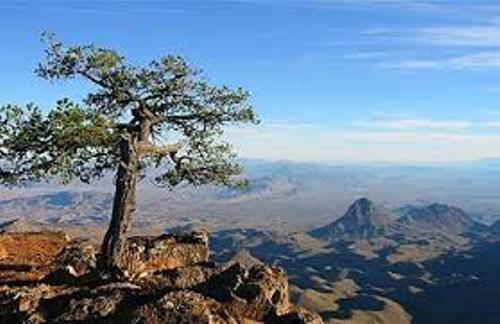 Facts about Big Bend National Park