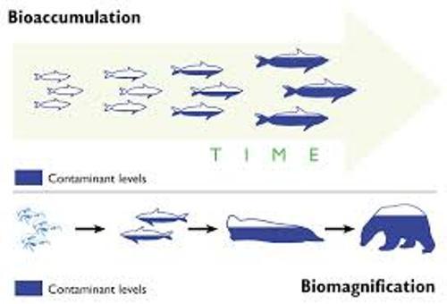 Bioaccumulation Level