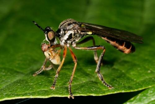 Biological Control Facts