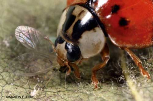 Biological Control Image