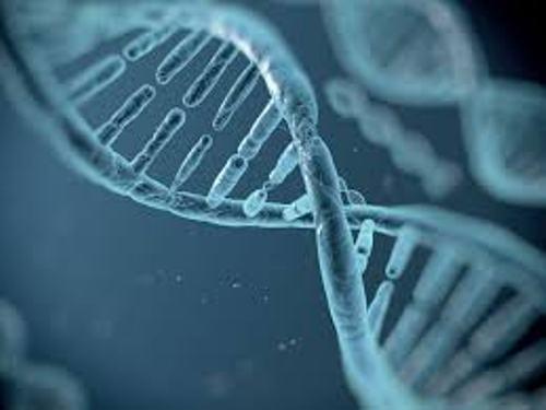 Biology DNA