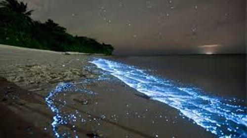 Bioluminescence Glow