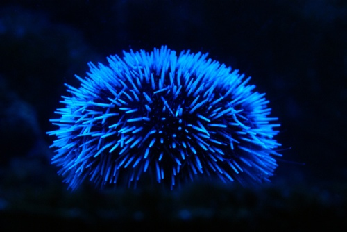 Bioluminescence Pic