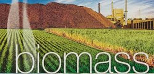 10 Facts About Biomass Fact File