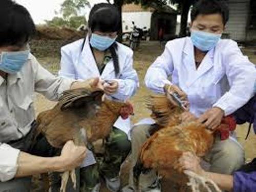 Bird Flu Facts