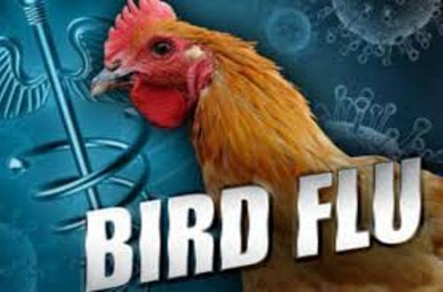 Bird Flu Picture