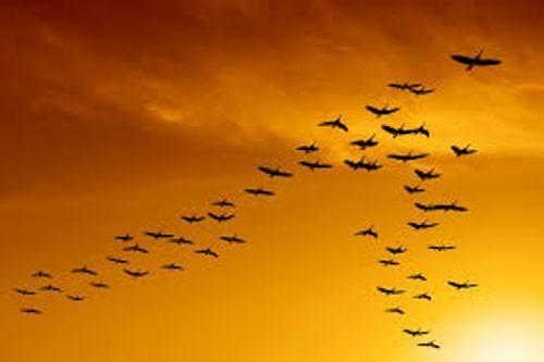 Bird Migration Facts
