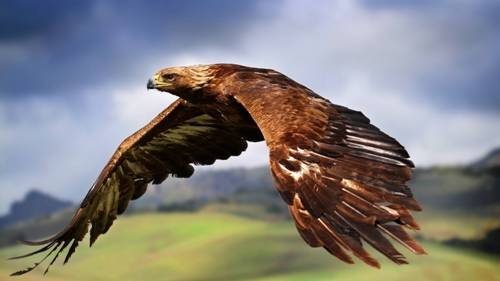 Birds of Prey Fly