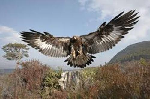 Birds of Prey Pic