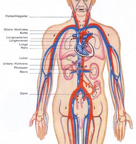 Blood Circulation Facts