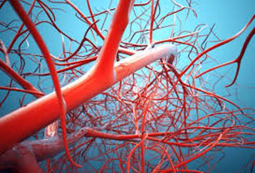 Blood Vessels Picture