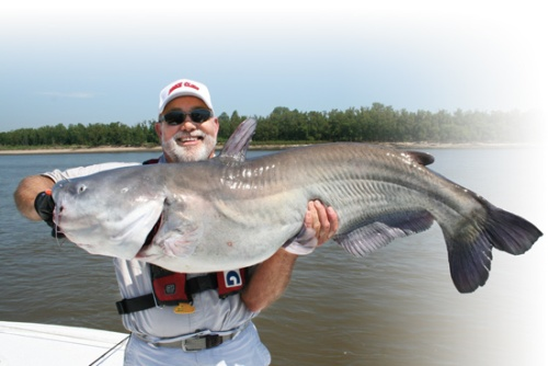 Blue Catfish Facts
