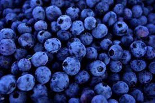 10 Facts About Blueberries Fact File