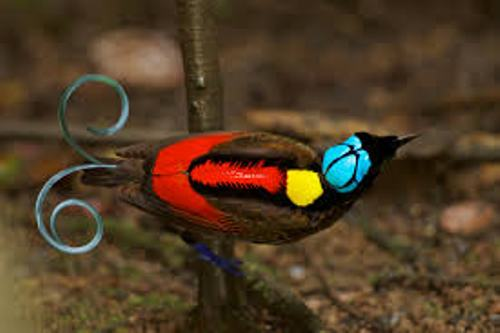 Cute Bird of Paradise