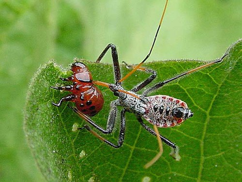 Facts about Biological Control