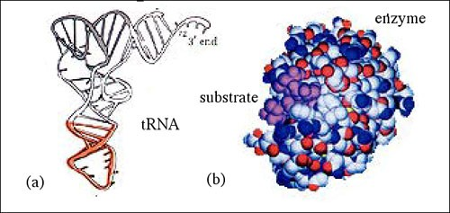 Facts about Biomolecules