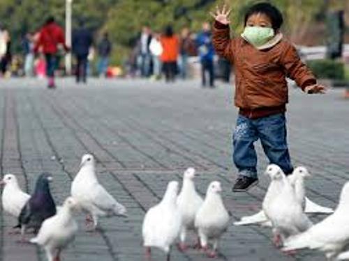 Facts about Bird Flu