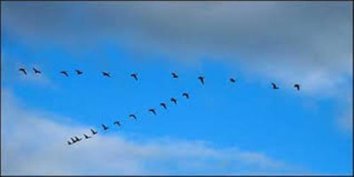 Facts about Bird Migration