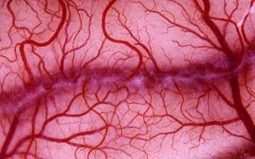 Facts about Blood Vessels
