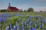 10 Facts about Bluebonnets