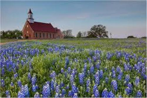 Facts about Bluebonnets