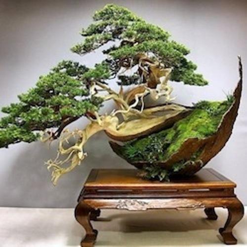 Bonsai Tree Pic