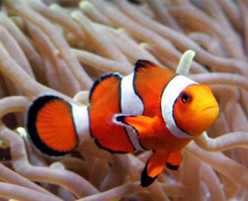 Bony Fish Image