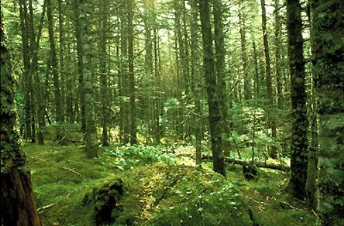 Boreal Forest Facts
