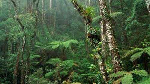 Borneo Forest
