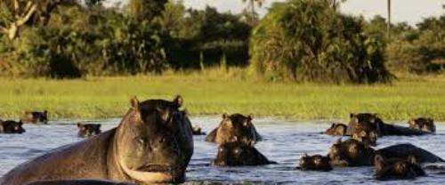 Botswana Pic